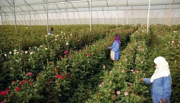 ethiopian-flower-industry