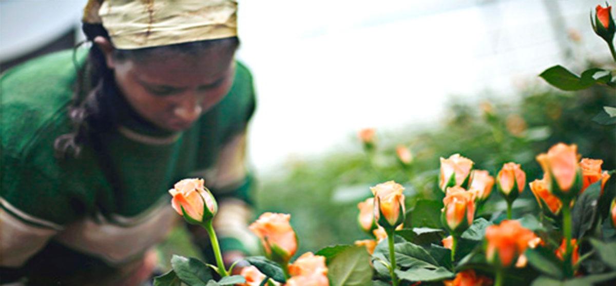 Ethiopia-Horticulture