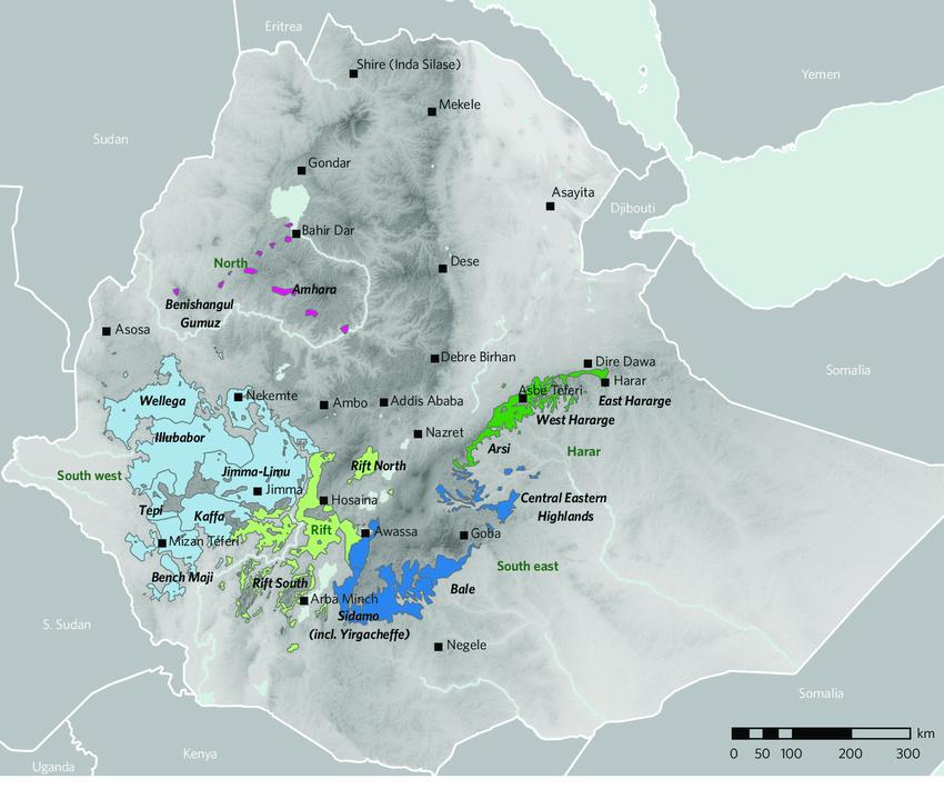 Ethiopia: Italian espresso Originally From Harar