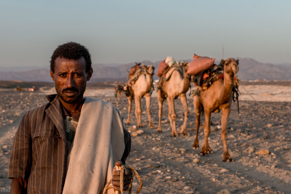 Afar Eritrea displacement.