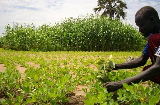 South Sudan's Agriculture