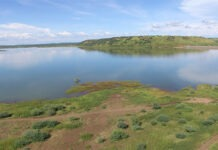 Eitrea Transforming Arid Zones into Wetlands