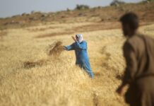 Sudan raises local wheat buying price