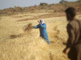 Sudan raises local wheat buying price